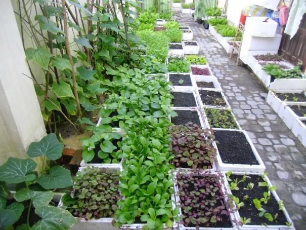 Tất tần tật các mẹo trồng rau trong thùng xốp chị em không thể bỏ qua